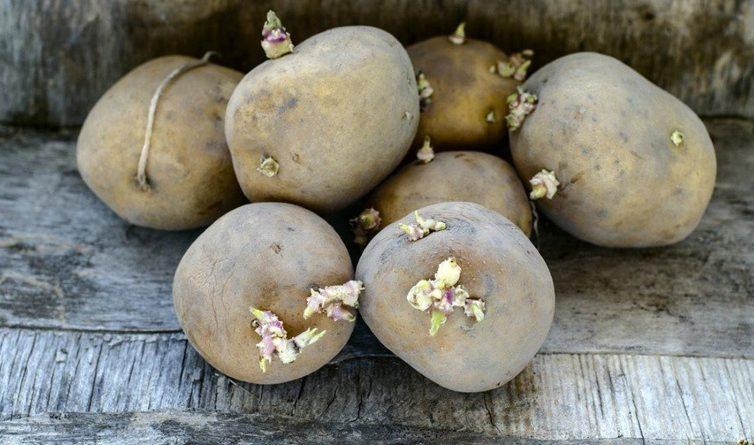 Filizlenen patatesin zararları neler baş ağrısı başladıysa...